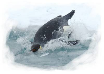 The penguin: a marine organism that is also a bird.